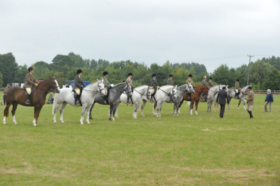Midland Irish Draught Horse Show 2013