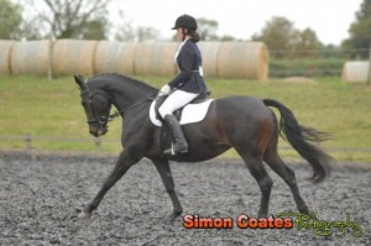 Trailblazers Dressage at High Cross Equestrian Centre, 9th October
