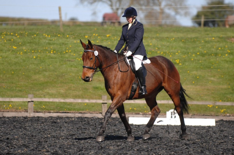 High Cross Dressage – Trailblazers Qualifiers