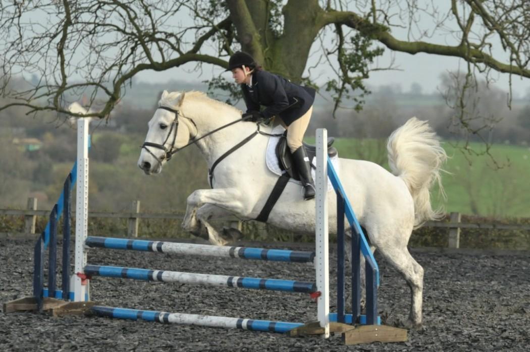 Inter-university Equestrian Day