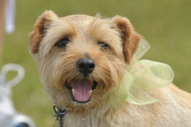 Photos from the Roade Charity Dog Show