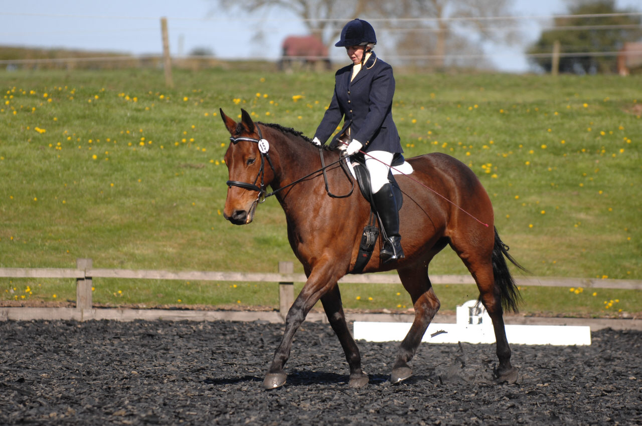 Trailblazers Dressage Qualifiers